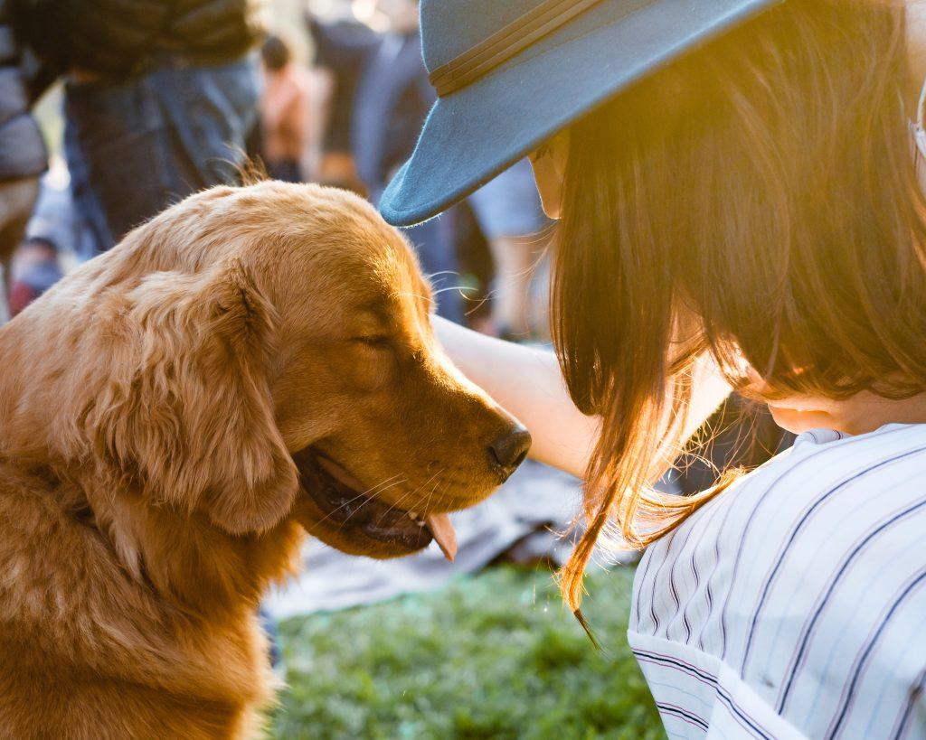 Un chien heureux qui reçoit des caresses