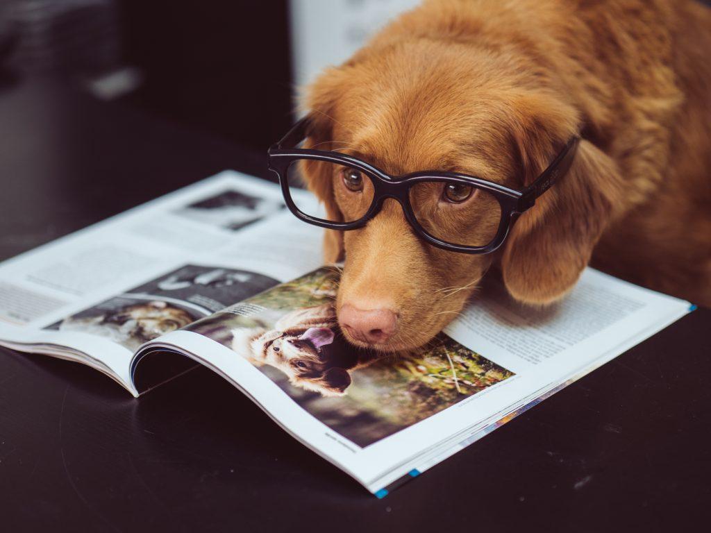 """Un chien avec des lunettes qui """"lit"""" un livre"""