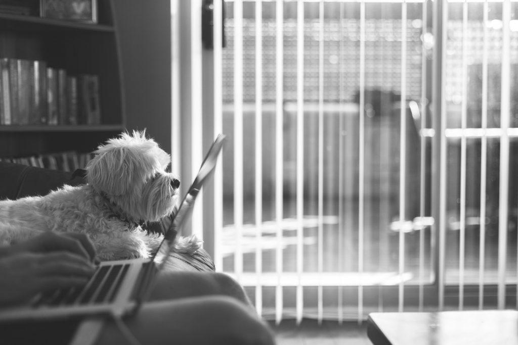Photo en noir et blanc d'un chien sur un canapé